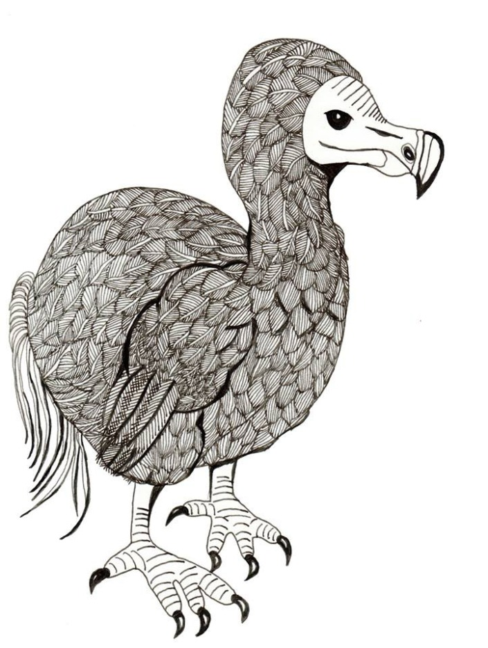 Dodo original scan
